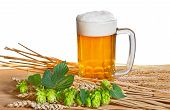 stock photo of suds  - beer and raw material for beer production on the white background - JPG