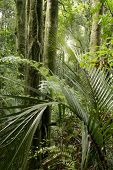 pic of jungle  - New Zealand tropical jungle forest - JPG
