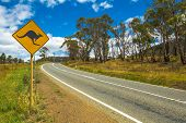 foto of kangaroo  - Warning sign for kangaroo crossing on Austalian country road - JPG