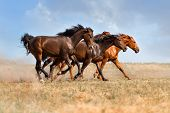 pic of wild horse running  - Group of beautiful horse run gallop on field with dust - JPG