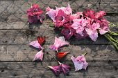 pic of gladiolus  - Lovely blooming gladiolus flowers on rustic wooden planks - JPG