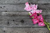 picture of gladiolus  - Lovely blooming gladiolus flowers on rustic wooden planks - JPG