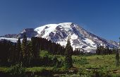 Mt. Rainier In The Spring