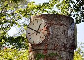 Clock and Trees