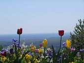 Flowers Over Looking The Mountains Of Virginia