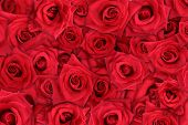 stock photo of red rose  - Layers of red roses create a 3D background - JPG