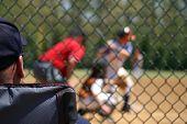 Baseball Spectator
