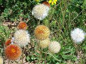 Texas Wildflowers Roadside