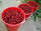 Fruits....