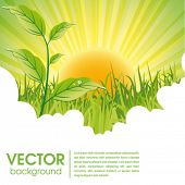 nature ecology poster and website page