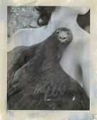pic of ero  - Photography based mixed medium image of hawk with woman - JPG