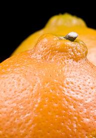 stock photo of tangelo  - Tangelo oranges grown in Bolombolo Antioquia - JPG