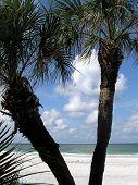 Tropical Florida poster