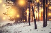 Christmas Background. Winter Forest At Sunrise With Shining Lights Snowflakes. Frosty Trees In Fores poster