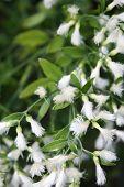Flowering Plant Closeup
