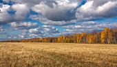 stock photo of splayed  - Yellow splayed field of mowing with far off trees under blue sky and clouds - JPG