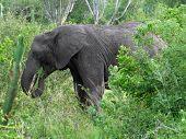 Elefanten in der grünen vegetation