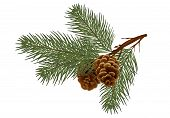 Christmas  Pine Tree Branches And Cones. Design Element In Realistic Style For Christmas Decoration. poster