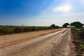 Brazilian Dirt Road In Perspective. Famous Brazilian Transpantaneira Dirt Road. Pantanal Area, Brazi poster