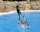 PUERTO DE LA CRUZ, TENERIFE - APRIL 15: Dolphin show in the Loro Parque, which is now Tenerife's sec