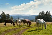 Nature Landscape With Wild Horses. Wild Horses In Nature Landscape. Mountain Landscape. Mountain Hor poster