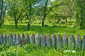 old wooden fence in a spring meadow