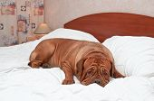 stock photo of goodnight  - Big Goodnight Dog on Bed - JPG