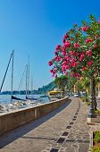 Alley with flower covered trees by a lake marina, Italy