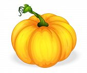 illustration of yellow pumpkin on a white background
