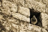 Dove In A Wall