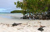 Marine Iguanas On Beach