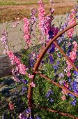 Pastel Colored Larkspur Flowers With Rusty Wagon Wheel