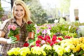 picture of showrooms  - Female florist or gardener in flower shop or nursery - JPG
