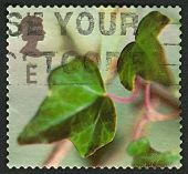 UK - CIRCA 2002: A stamp printed in UK shows image of the Ivy, circa 2002.