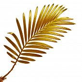 Single leaf  branch of palm tree isolated on white background