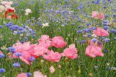 Spring Field Of Wildflowers