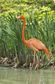 Pink Flamingos In The City Garden.