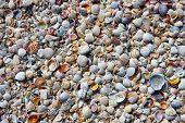 Pequeñas conchas