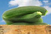 fresh zucchini's (Cucurbita pepo) in a wooden box against a blue sky with clouds