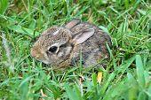 Bebé oriental conejo Bunny
