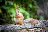 Wild pretty squirrel sitting on log