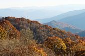 picture of gatlinburg  - Great smokey mountain tree in november near  gatlinburg - JPG