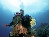 Female Scuba Diver And Fauna