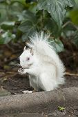 White  albino Squirrel