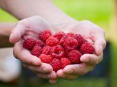 Handful Raspberries