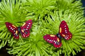 Two Butterfly On The Flowers