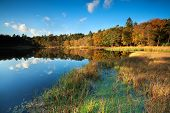 Little Lake In Autumn Forest