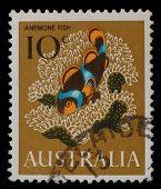 AUSTRALIA - CIRCA 1966: a stamp printed in the Australia shows Anemone fish, Clown fish, circa 1966