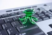 pic of glass frog  - The green glass frog sitting on the computer keyboard - JPG