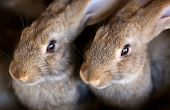 stock photo of husbandry  - Young rabbit animal farm and breeding - JPG